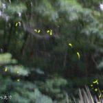 横浜のこども自然公園でホタル観賞と横浜でホタルが見られるスポットまとめ